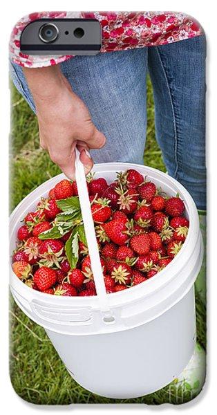 Strawberries iPhone Cases - Fresh strawberries iPhone Case by Elena Elisseeva