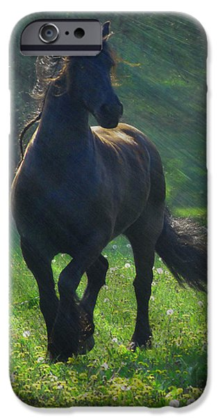 Horse Photographs iPhone Cases - Friesian Sun iPhone Case by Fran J Scott