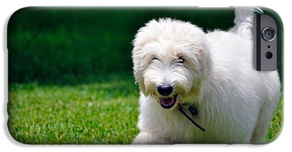 Puppies iPhone Cases - Frisky Golden Doodle iPhone Case by Kristina Deane