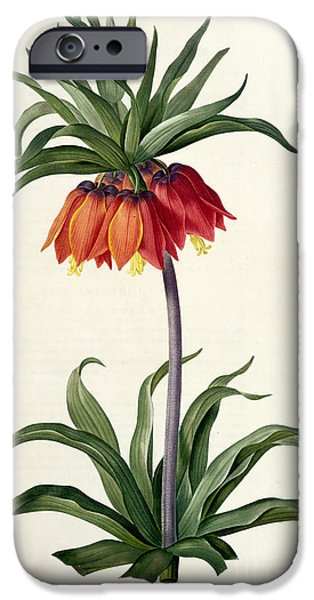 Plant Drawings iPhone Cases - Fritillaria Imperialis iPhone Case by Pierre Joseph Redoute