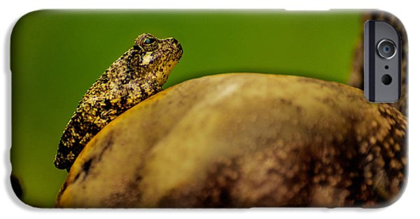 Pears Tapestries - Textiles iPhone Cases - Frog Waits iPhone Case by James Hennis