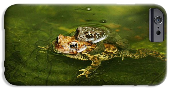 Couple Pyrography iPhone Cases - Frogs In Love iPhone Case by Valia Bradshaw