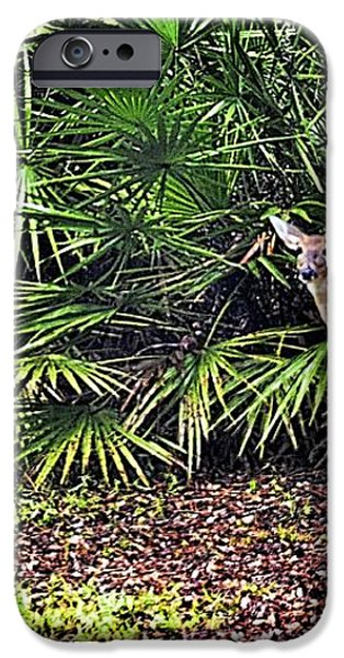From The Palmetto Bushes iPhone Case by Jan Amiss Photography