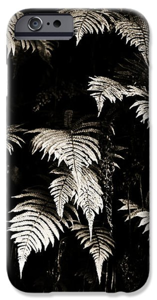 Fronds iPhone Case by Marilyn Hunt