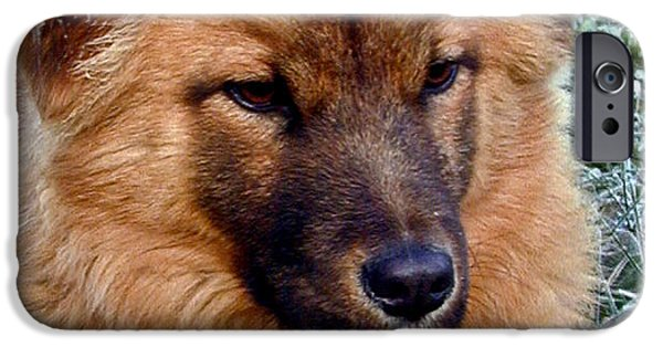 West Fork iPhone Cases - Frosty Dog iPhone Case by Douglas Barnett
