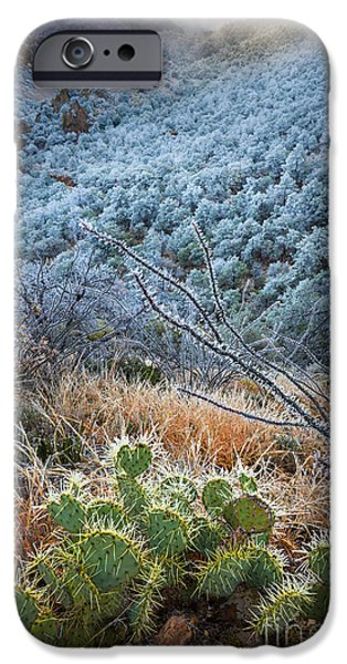 Pears iPhone Cases - Frosty Prickly Pear iPhone Case by Inge Johnsson