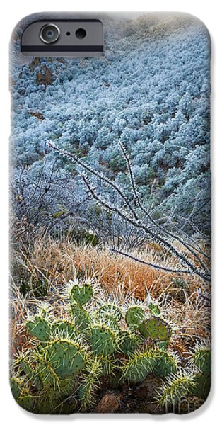 Basin iPhone Cases - Frosty Prickly Pear iPhone Case by Inge Johnsson