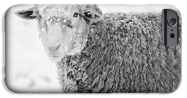 Sheep iPhone Cases - Frozen Dinner iPhone Case by Mike  Dawson