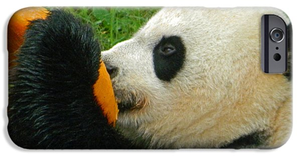 Smithsonian iPhone Cases - Frozen Treat For Mei Xiang The Giant Panda iPhone Case by Emmy Marie Vickers