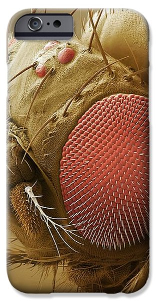 Fruit Fly Head, Sem iPhone Case by Power And Syred