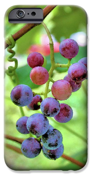 Concord Grapes iPhone Cases - Fruit of the Vine iPhone Case by Kristin Elmquist