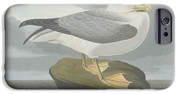 Seagull Drawings iPhone Cases - Fulmer Petrel iPhone Case by John James Audubon
