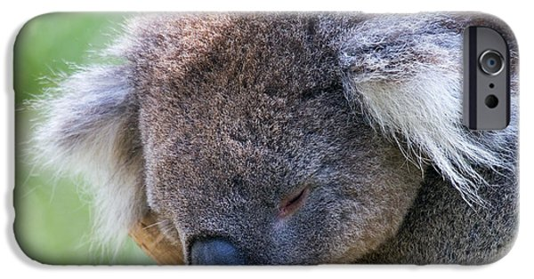 Sleepy iPhone Cases - Fuzzy iPhone Case by Mike  Dawson