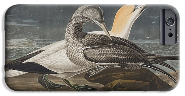 Audubon iPhone Cases - Gannet  iPhone Case by John James Audubon