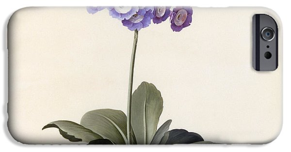 Flora Drawings iPhone Cases - Garden Auricula iPhone Case by Georg Dionysius Ehret