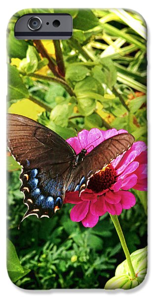 Pleasure iPhone Cases - Garden Greetings iPhone Case by Olahs Photography