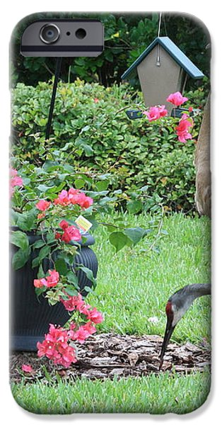 Garden Visitors iPhone Case by Carol Groenen