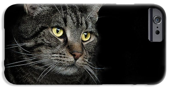 Grey Photographs iPhone Cases - Gaze  iPhone Case by Paul Neville