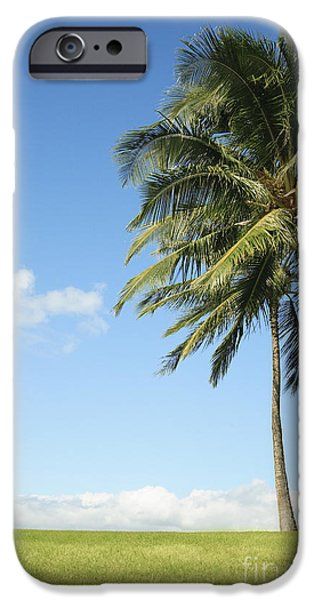 Overhang iPhone Cases - Generic Palm Tree iPhone Case by Brandon Tabiolo - Printscapes