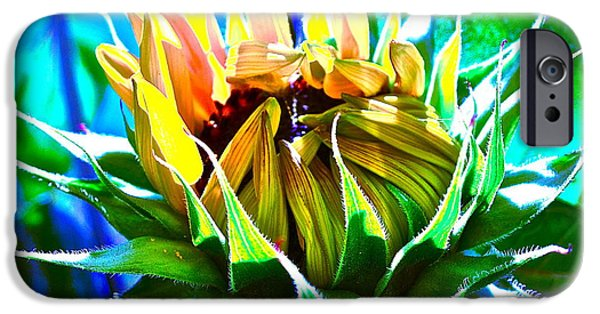 Sunflower Photograph iPhone Cases - Genesis iPhone Case by Gwyn Newcombe