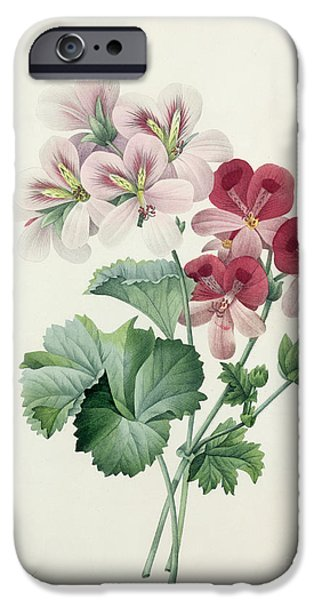 Plant Drawings iPhone Cases - Geranium Variety iPhone Case by Pierre Joseph Redoute