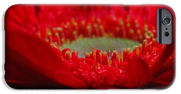Close Up Floral iPhone Cases - Gerber Daisy iPhone Case by Juergen Roth