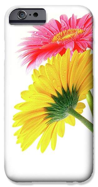 Gerber Flowers iPhone Case by Carlos Caetano