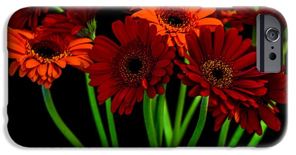 Flora iPhone Cases - Gerbera Daisies2 iPhone Case by Olga Photography