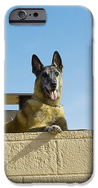 German Shephard Military Working Dogs iPhone Case by Stocktrek Images