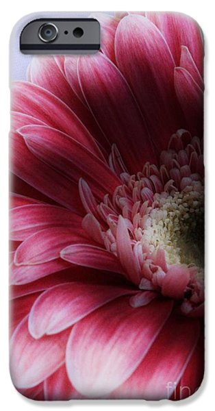 Drama iPhone Cases - Ghostly Gerbera iPhone Case by Clare Bevan