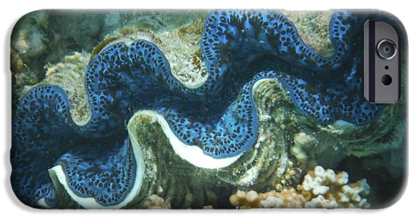Lips iPhone Cases - Giant Blue Lip Clam iPhone Case by Karen j Kobrin Cohen