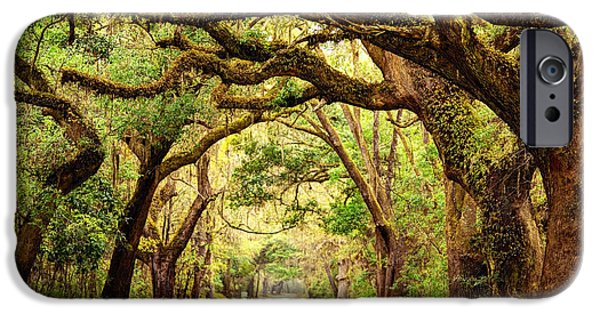 Overhang iPhone Cases - Giant oak trees draped with spanish moss iPhone Case by Denis Tangney Jr