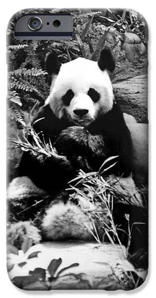 Fury iPhone Cases - Giant Panda in Black and White iPhone Case by Chris Smith