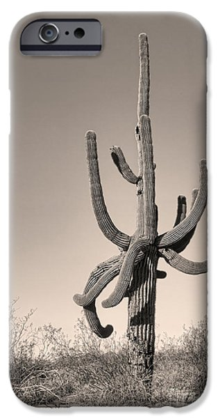 Giant Saguaro Cactus Sepia Image iPhone Case by James BO  Insogna