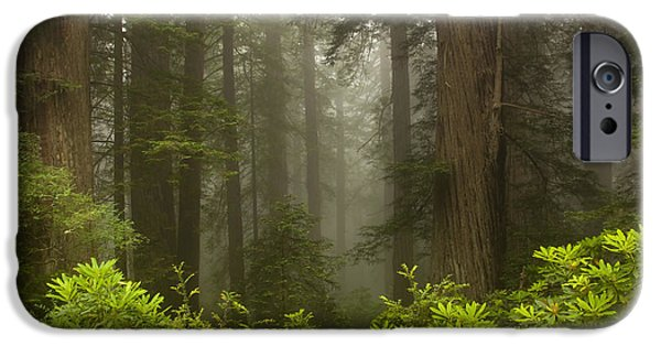 Mist iPhone Cases - Giants in the Mist iPhone Case by Mike  Dawson