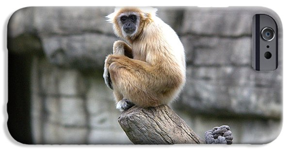 Bonding iPhone Cases - Gibbon Seated Portrait iPhone Case by Roy Williams