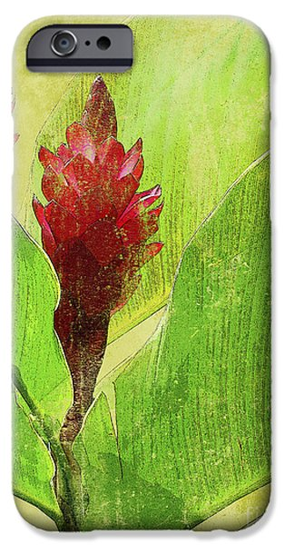 Art Medium iPhone Cases - Gingimbre iPhone Case by Kaypee Soh - Printscapes