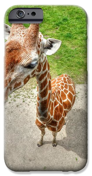 Giraffe's Point of View iPhone Case by Michael Garyet