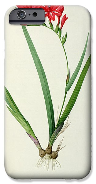 Plant Drawings iPhone Cases - Gladiolus Cardinalis iPhone Case by Pierre Joseph Redoute