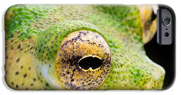 Frogs Photographs iPhone Cases - Glass Frog Eyes iPhone Case by Dirk Ercken