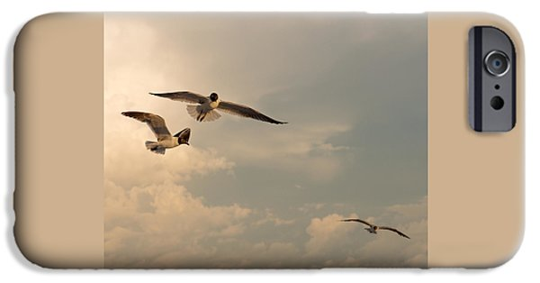 Seagull iPhone Cases - Gliders iPhone Case by Don Spenner