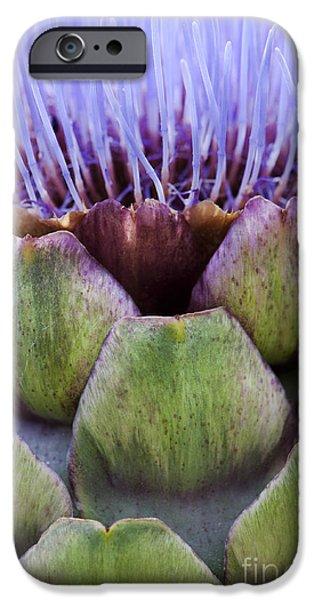 Crops iPhone Cases - Globe artichoke iPhone Case by Tim Gainey
