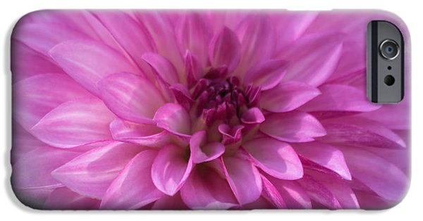 Floral Photographs iPhone Cases - Glowing Dahlia iPhone Case by Kim Hojnacki