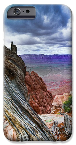 Gnarly iPhone Cases - Gnarly Desert iPhone Case by Jim DeLillo