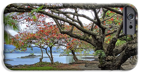 Gnarly iPhone Cases - GNARLY TREES of SOUTH HILO BAY - HAWAII iPhone Case by Daniel Hagerman