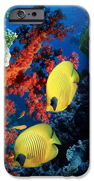 Under Water. Nature iPhone Cases - Golden Butterflyfish iPhone Case by Georgette Douwma
