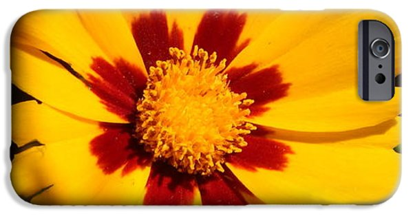 Arkansas iPhone Cases - Golden Coreopsis iPhone Case by Jefferson Danley