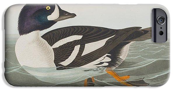 Animal Cards iPhone Cases - Golden-eye Duck iPhone Case by John James Audubon