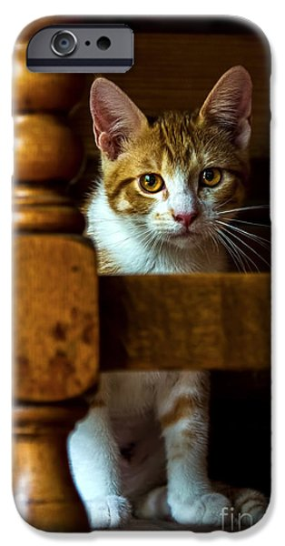 Young iPhone Cases - Golden Eyes iPhone Case by Gary Holmes
