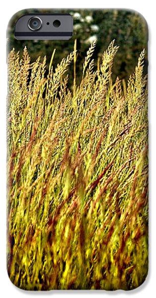 golden grasses iPhone Case by Meirion Matthias